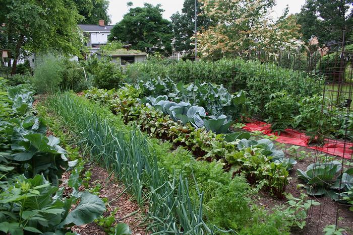 Здоровье в огороде