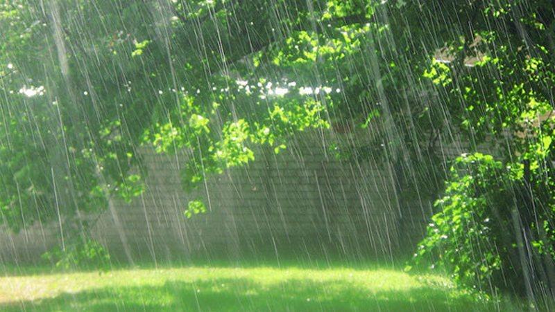 Вызывающие дождь – тайны дождевой магии