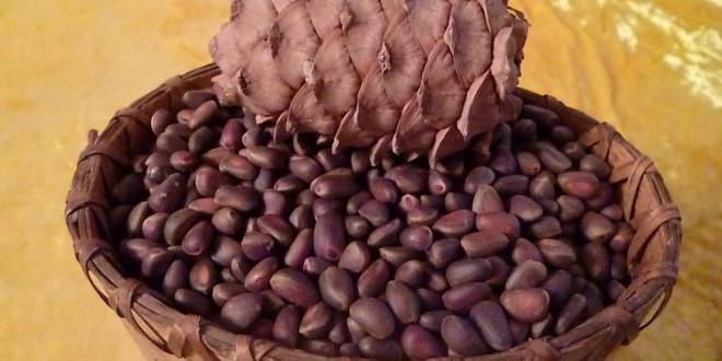 Lechenie-miomy-kedrovymi-orehami-003