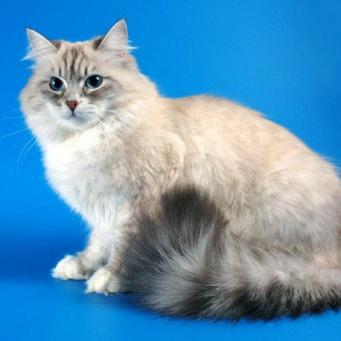 холодные лапы  у кошки