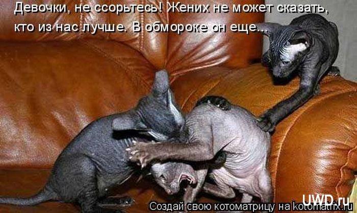"""Веселые котоматрицы #29 (50 штук) """" Ex.BY - фотоприколы, фото девушек и животных"""