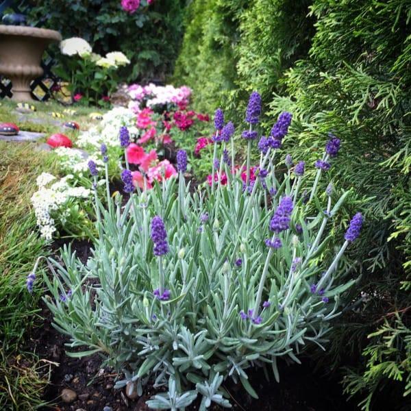 Эта женщина превратила свой уродливый сад в нечто невероятное идеи для дачи, подарки детям, сад
