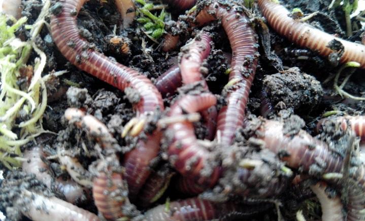 Как сохранить червей в жару. Два отличных способа