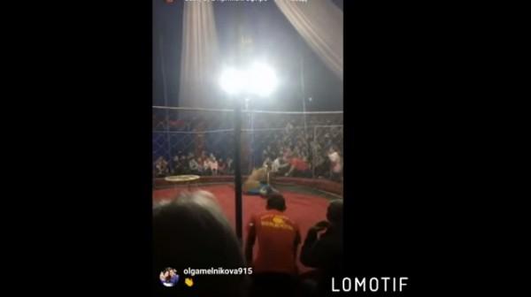 Инцидент в цирке-шапито: льв…