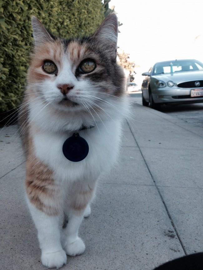 Кот, который делает этот мир красивее, потому что...ну просто посмотрите на него  животные, коты, юмор
