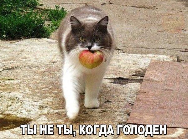 ТЫ не ты, когда голоден)