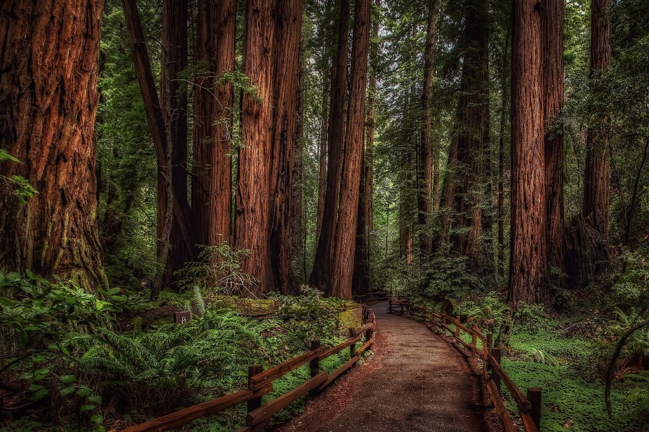 Muir-Woods-National-Monument-United-States3