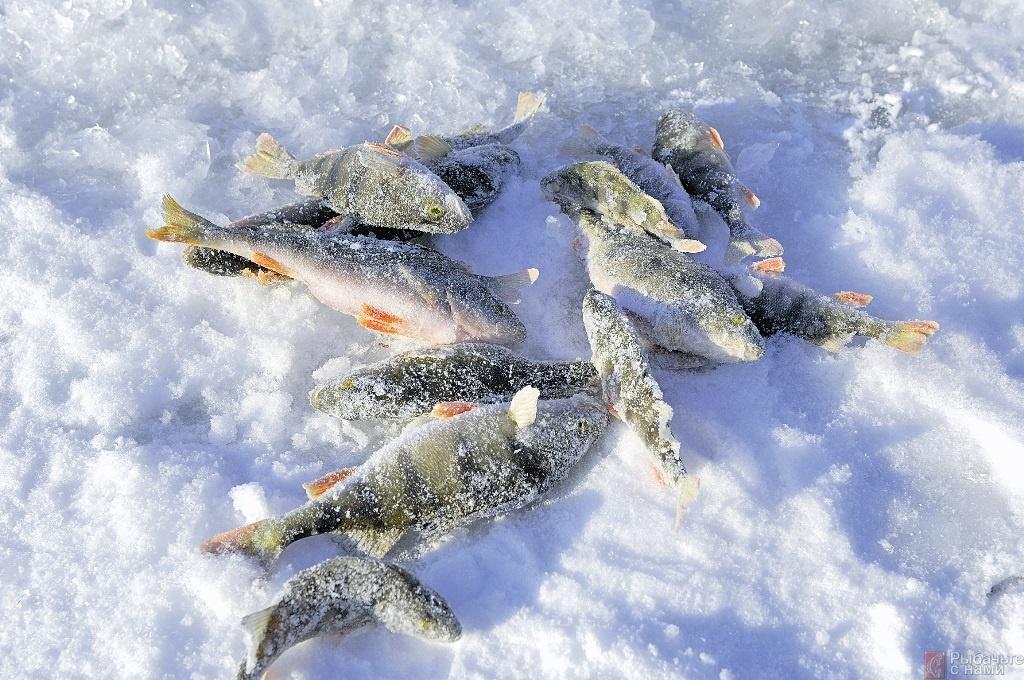 Первый лед и жор рыбы