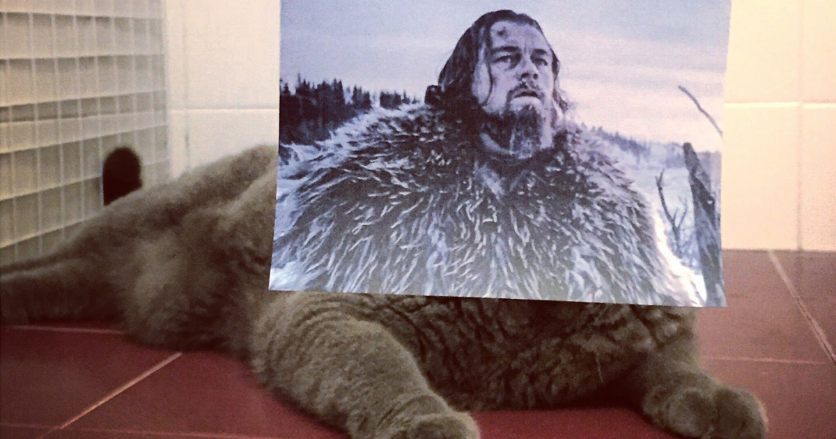 """Photographer Follows Cats Around To """"Insert"""" Them Behind Famous Movie Posters, And The Result Is Purrfect"""
