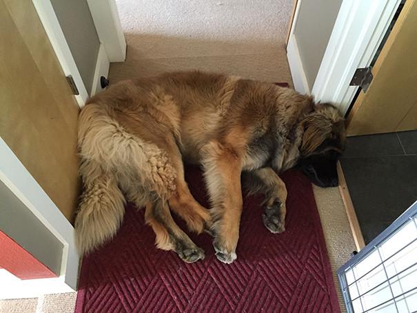 44. Проблемы больших собак размер, собака