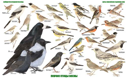 какие птицы поют ночкой в москве в апреле