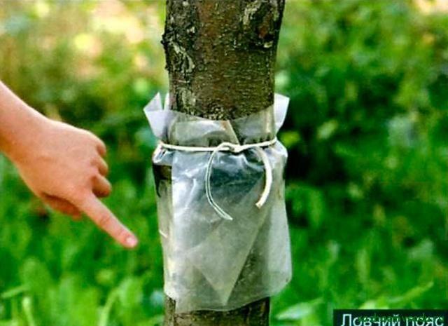Что делать, если не плодоносит яблоня Азбука садовода
