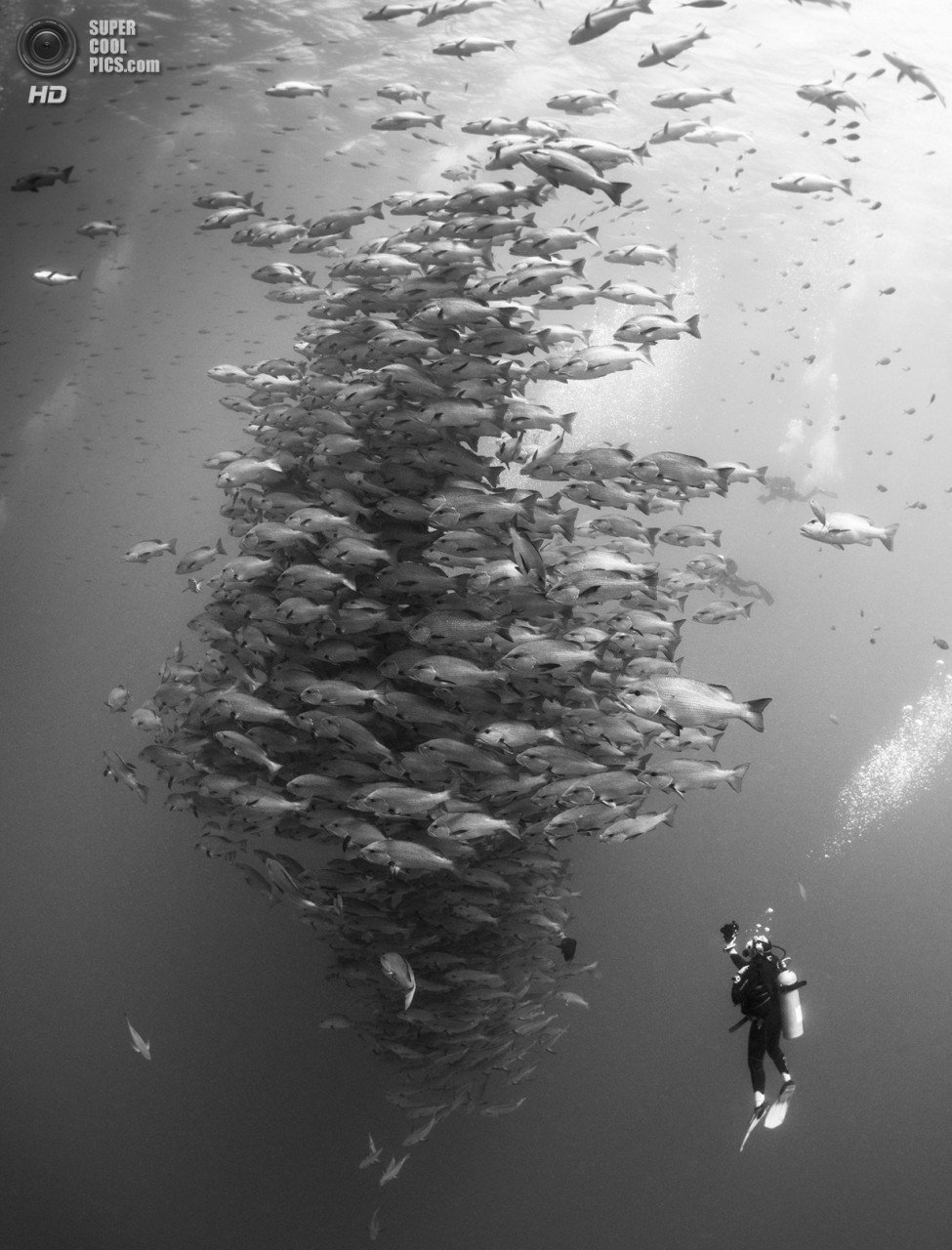Категория: Wide-angle/Divers. 1 место. (Nadya Kulagina/UnderwaterPhotography.com)