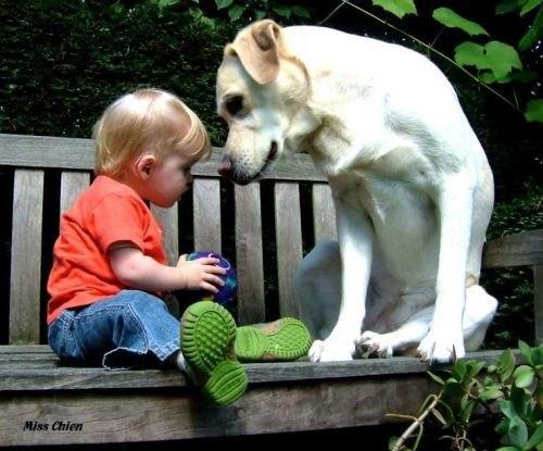 Я люблю животных за их природную чистоту и искренность.