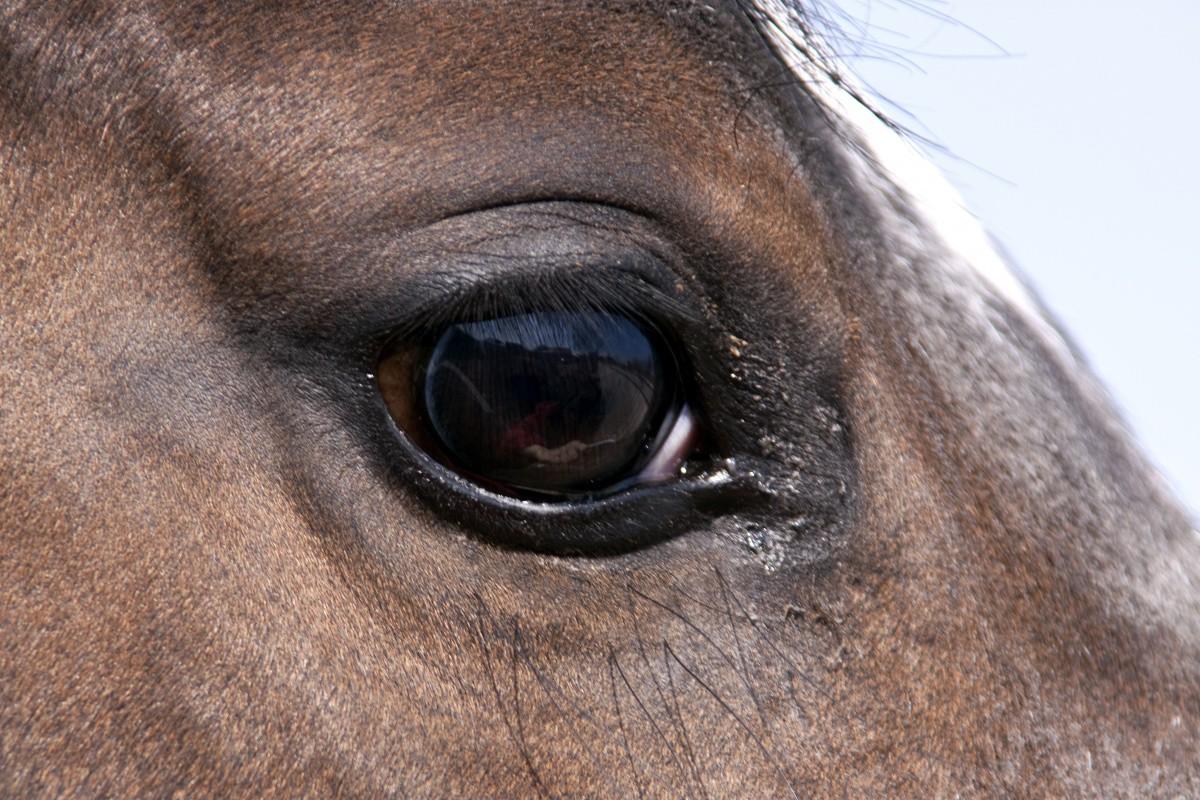 Интересный факт лошади, факты, фото