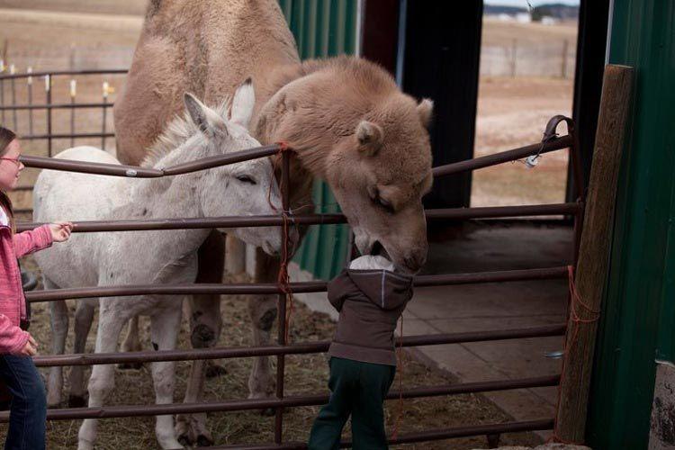 Ожидания и реальность: 19 забавных случаев, когда поход в зоопарк накрылся медным тазом