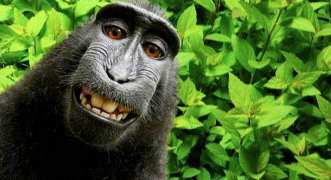 В США через суд потребовали возместить павиану ущерб за нарушение его прав