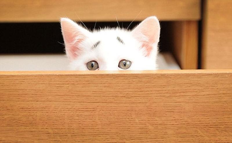 Чем так удивлен этот котенок?