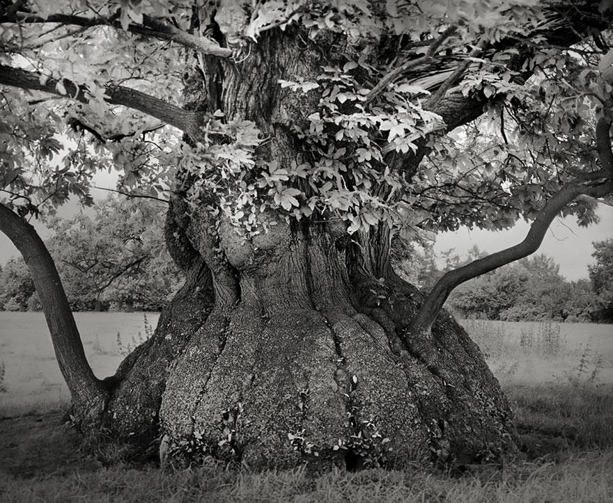 Деревья древние как мир в фотографиях из 14-летнего путешествия-4