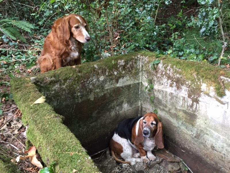 Упав в яму, эта собака была обречена. Но верный друг не оставил ее в беде!