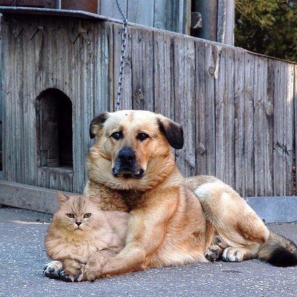 Они жили как кошка с собакой. Он её охранял. Она его любила.
