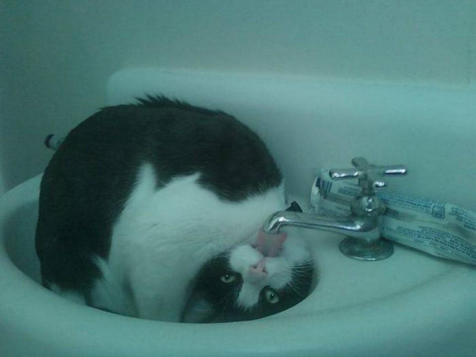 lolcats06 100 лучших фотографий кошек всех времен и народов