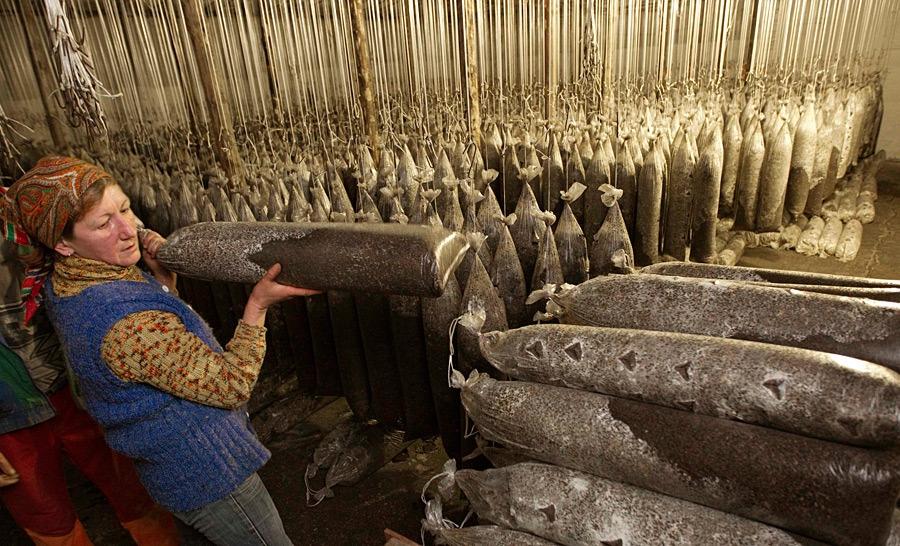 Как выращивают грибы в Беларуси беларусия, грибы