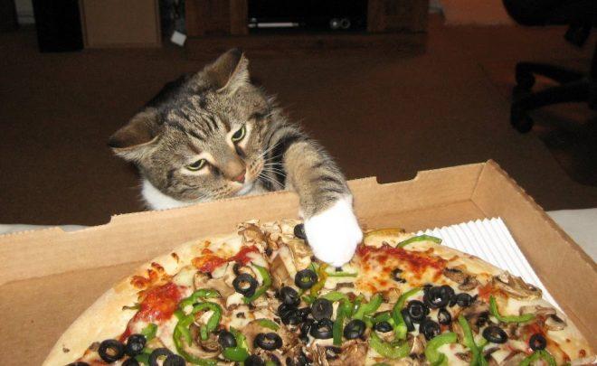 Почему кот все время просит есть: 5 особенностей, которые важно знать