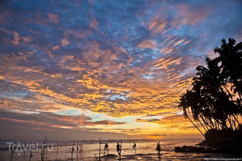 Шри-Ланка. Традиционная рыбалка на шесте / Фото со Шри-Ланки