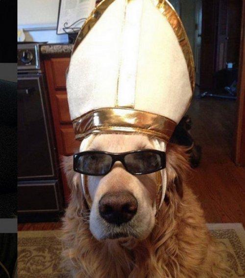 Собаки в костюмах папы римск…