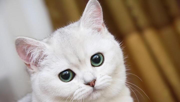 Собака спасла жизнь закопанной заживо кошке