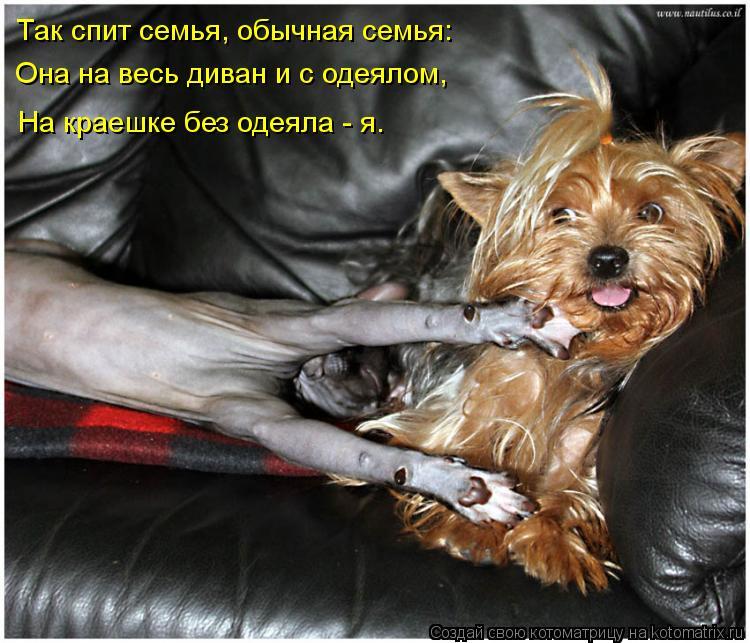 Котоматрица: Так спит семья, обычная семья: Она на весь диван и с одеялом, На краешке без одеяла - я.