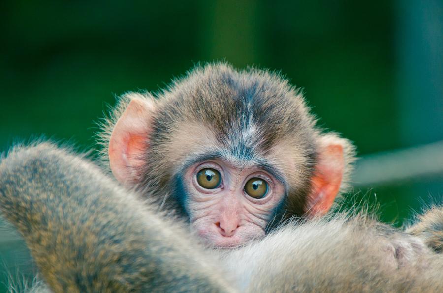 Почему так популярны фотографии детёнышей животных
