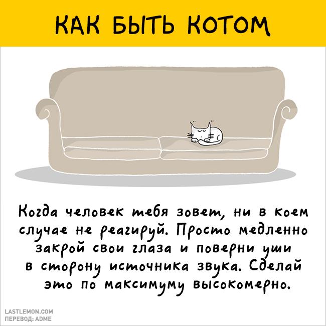 Радость быть котом
