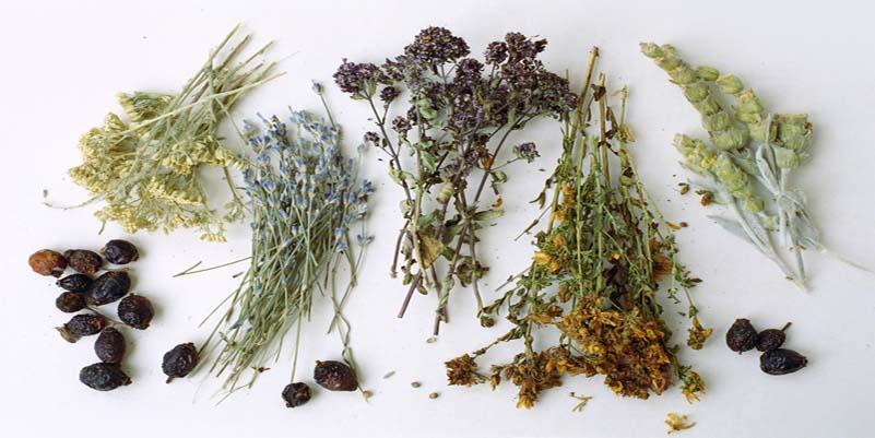 Лечение простатита лекарственными травами