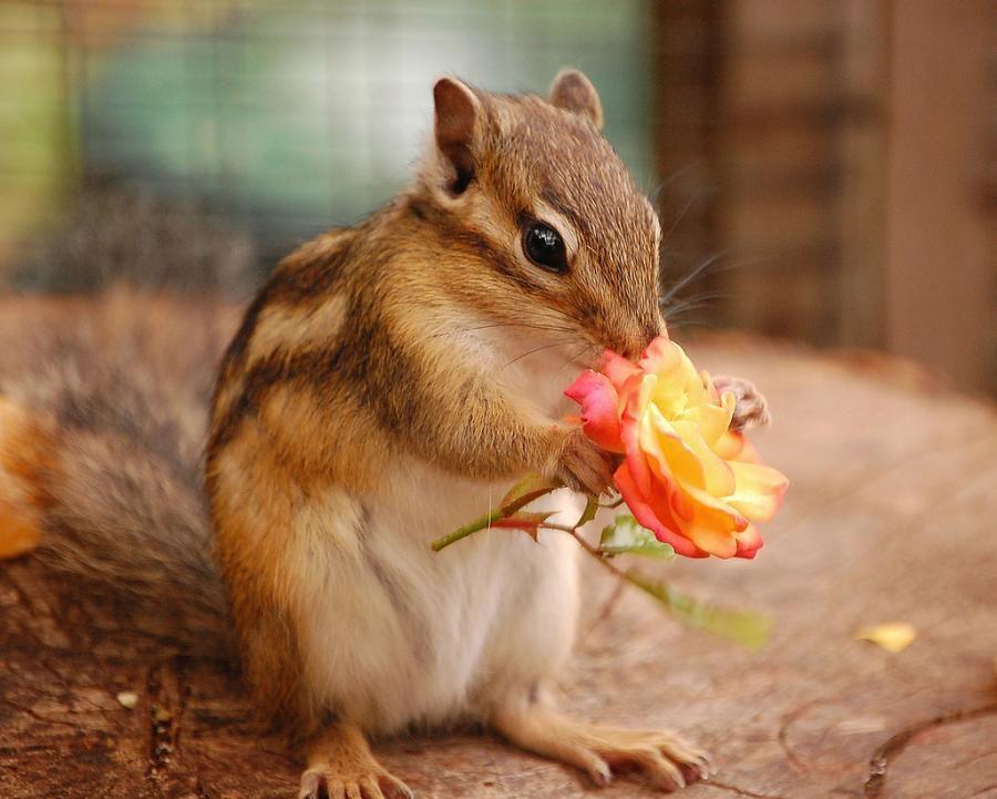 http://foto.infan.ru/img/f/24/1/1300906581_these_funny_animals_648_08.jpg