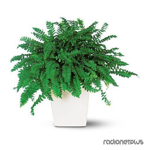 Растения, которые приносят материальное благополучие