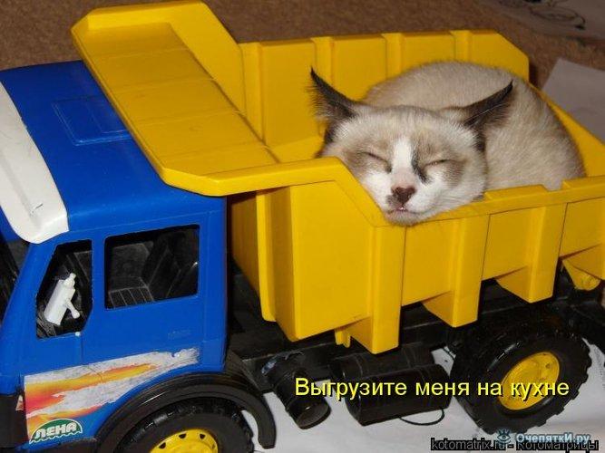 Юморная котоматрица 12