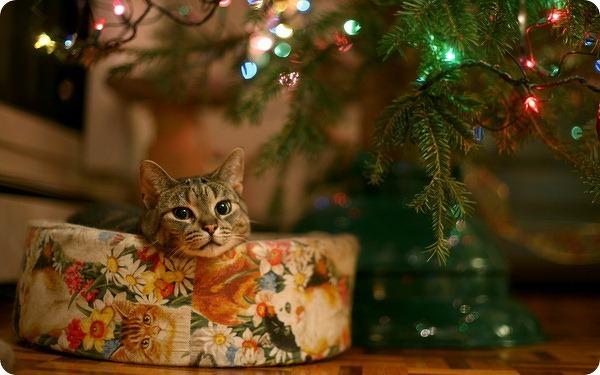 Наши любимцы в новогоднем интерьере! ))