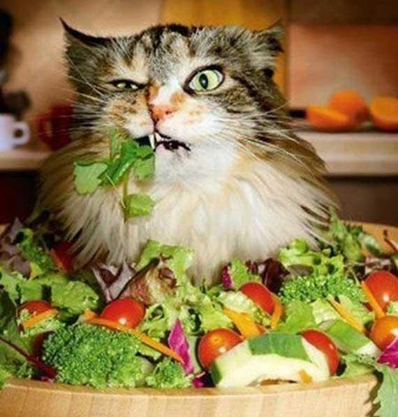 Развенчаем мифы о вегетарианстве
