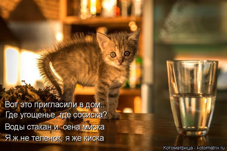 Котоматрица: Вот это пригласили в дом.. Где угощенье, где сосиска? Воды стакан и  сена миска Я ж не теленок, я же киска