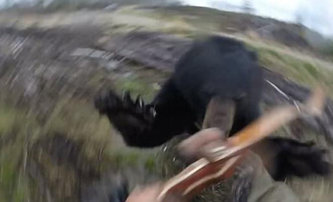Черный медведь против глупого охотника с луком: реальное видео