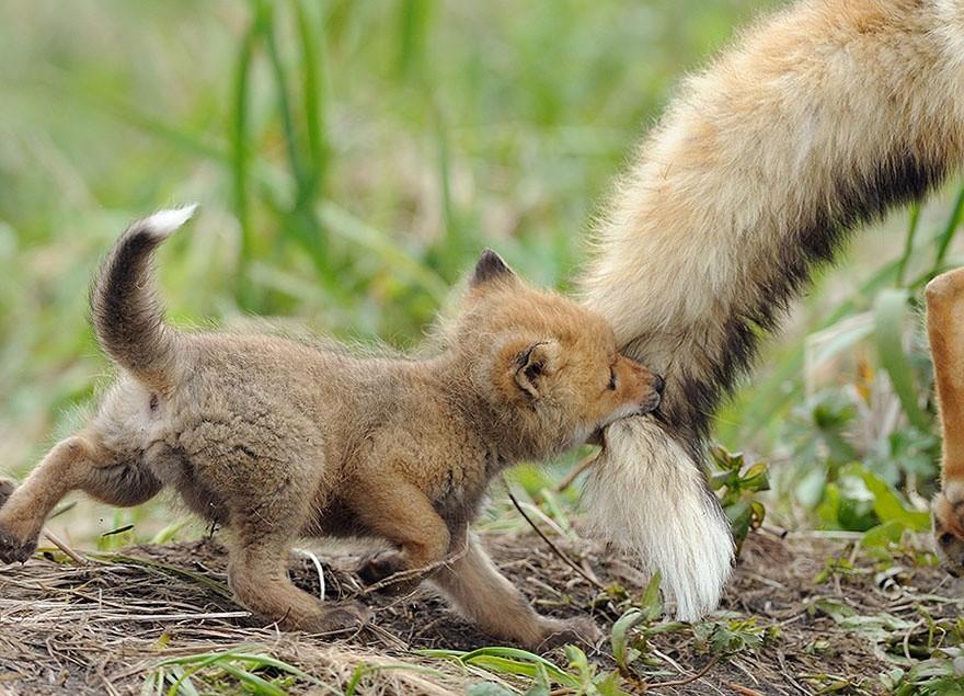 20 животных, которые знают, что мамина любовь — самая сильная животные, любовь, мама
