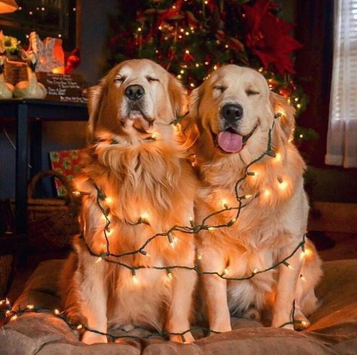 18 теплых новогодних историй, которые пропитаны ароматом мандаринов, хвои и волшебства