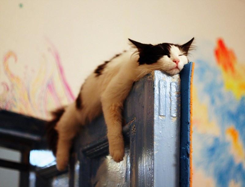 sleepingcats26 1 Коты, познавшие науку сна