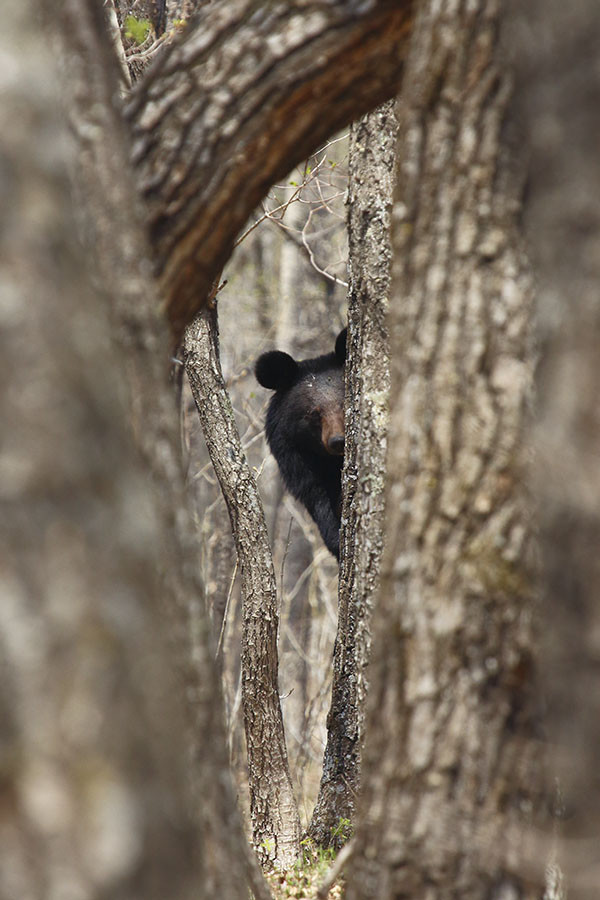 Неожиданно из-за дерева показалась чья-то морда дерево, животные, морда