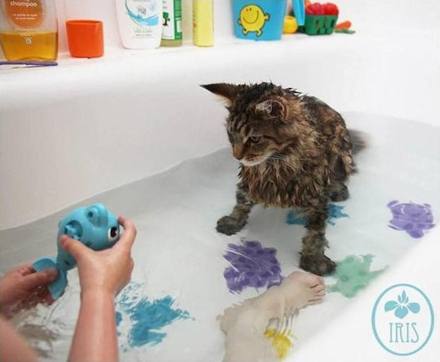 IrisandThula03 Как кошка Тула помогает девочке с аутизмом