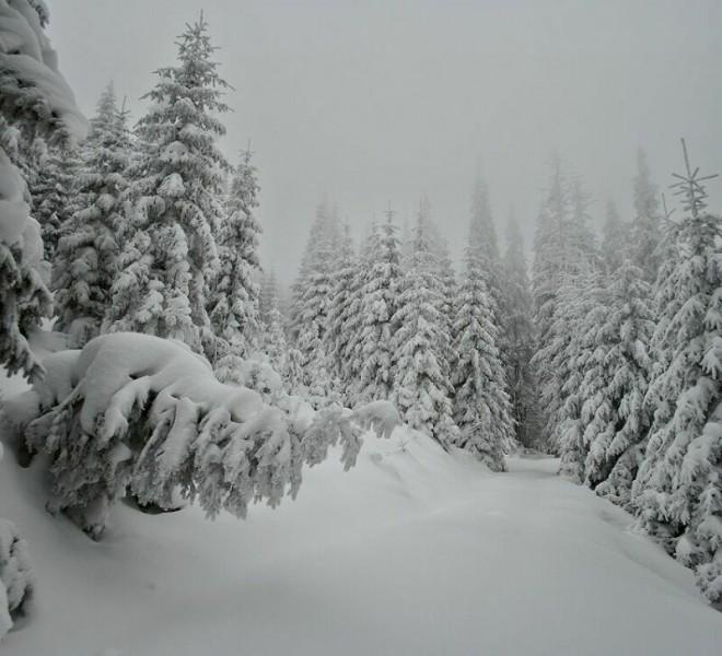 Чародейкою зимою околдован лес стоит...