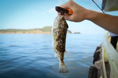 Ядовитых тропических рыб внезапно выловили в Черном море