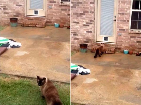 Парень установил кошачью дверь, но она не нужна коту, чтобы попасть в дом